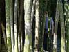 Suchbild mit Bambus und Marco