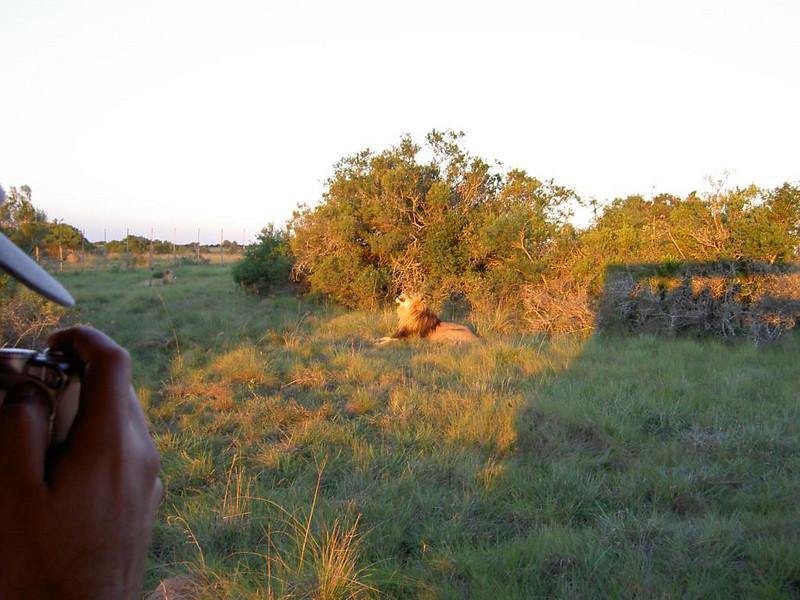 Landrover und Löwe