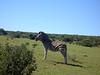 Steht lustig der Zebrastreifen.