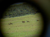 mehr Antilopen