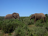2 Elefanten...