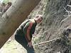 Ohne mich fällt der Baum sicherlich