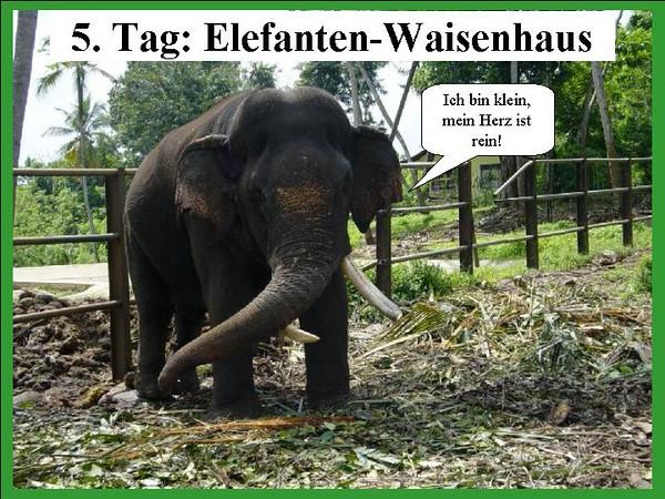 5. Tag: Elefanten-Waisenhaus