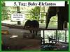 5. Tag: Baby-Elefant