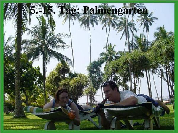 5.-15. Tag: Palmengarten