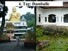 4. Tag: Dambulle