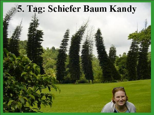 5. Tag: Schiefer Baum Kandy