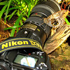 "An ""Owl Butterfly"" landed on my Nikon lens while visiting the Butterfly Jungle at the Wild Animal Park in San Diego.  3/ 27/10"