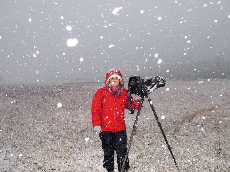 Going to great lengths to photograph an elk herd.  First snow storm of the season, Yellowstone NP. Oct 2011