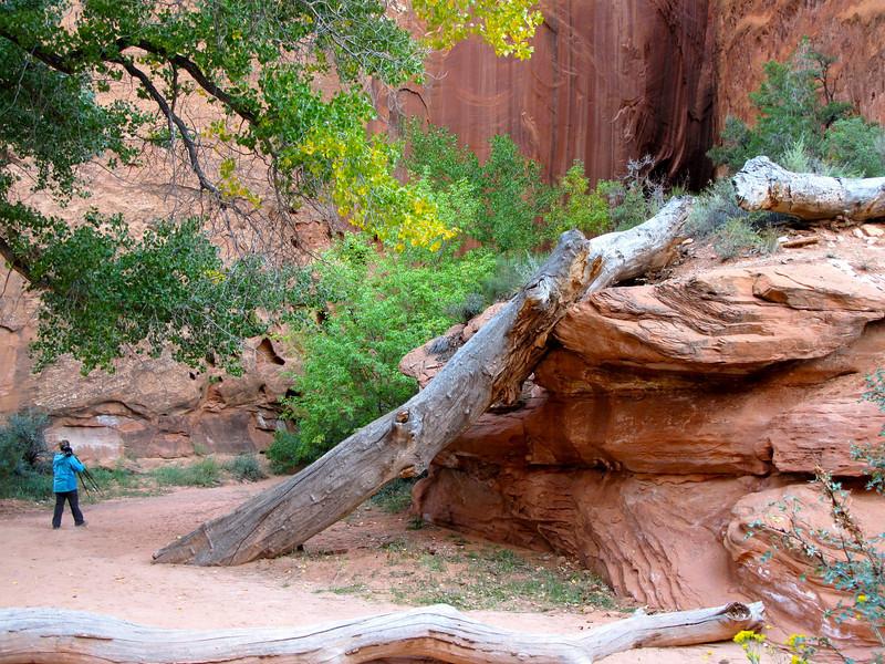 "Headed towards ""Long Canyon Slot"", near the Burr Trail, backcountry Boulder Mt., Utah. 9/26/10"