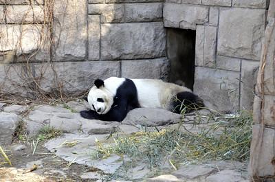 Panda Panda!