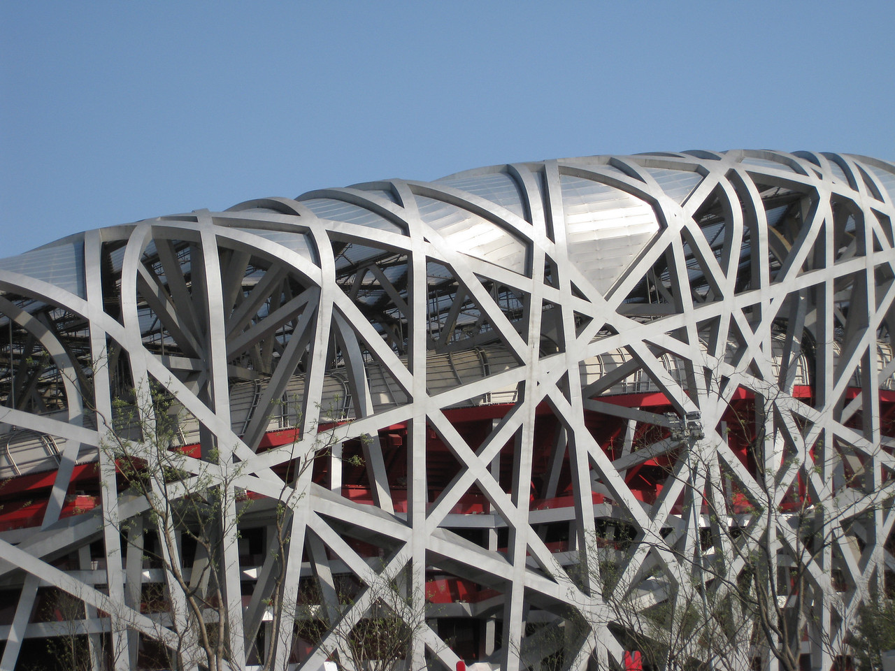 Birds nest up close. It was very cool.