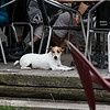 "Bruges - this is one of the ""guests"" enjoying the Beer Garden at the Vlissinghe Pub.  The Europeans are very civilized regarding the presence of animals in restaurants and pubs."