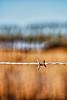 Barbed wired @ Damme - West Flanders - Belgium <br /> <br /> Alambrada en Damme - Flandes Occidental - Bélgica<br /> <br /> Stacheldraht in Damme - Westflandern - Belgien<br /> <br /> Fil barbelé à Damme - Flandre Occidentale - Belgique<br /> <br /> Prikkeldraad in Damme - West-Vlaanderen - België