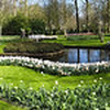 Panorama of Keukenhof Gardens, Holland