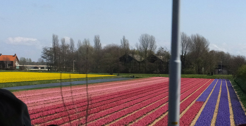 Miles and miles of fields of tulips
