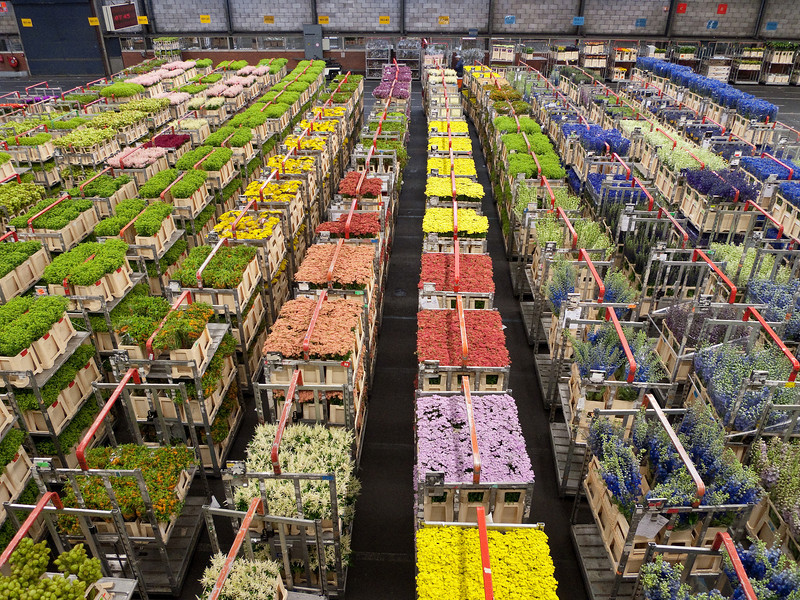 Trains of flower carts awaiting the auction process.