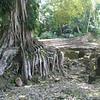 Belize06 - 106