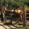 Belize 2007: Chaa Creek - Emma likes the ponies