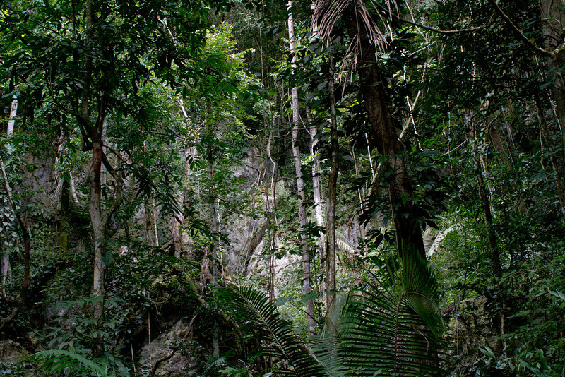 the belizean jungle