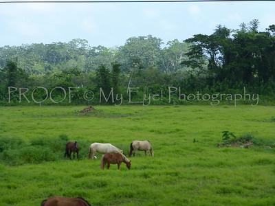 Belize 2014 - Silk Grass Zipline
