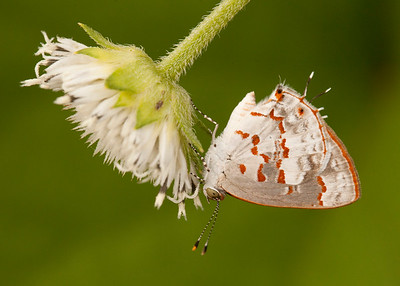 Cotton Tree Lodge - Fauna and Flora