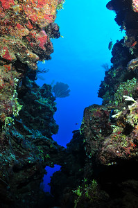 """© Joseph Dougherty. All rights reserved.   Tunnels and swim-throughs abound at the """"Love Tunnels"""" dive site.  Belize Barrier Reef, Ambergris Caye, Belize"""