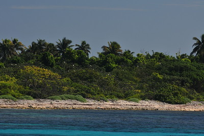 © Joseph Dougherty.  All rights reserved.   Half Moon Caye on the southeastern corner of Lighthouse Reef Atoll. The caye is an important breeding and nesting sanctuary for the Red-footed Boobie, and is also home to Wish Willy rock iguanas, giant terrestrial hermit crabs, and the rare endemic Island Leaf-Toed Gecko (Phyllodactylus insularis) .