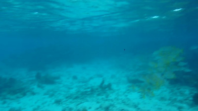 © Joseph Dougherty. All rights reserved.  The shallows of Shark Ray Alley, between Ambergris Caye and Caye Caulker.