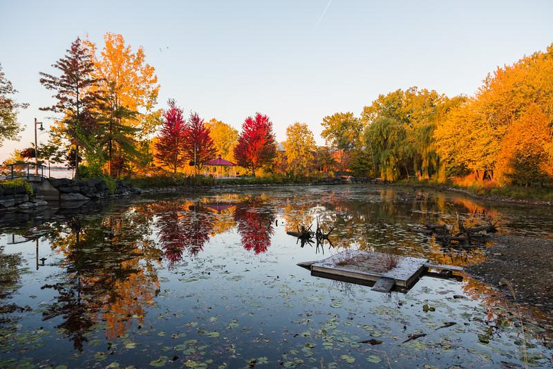 Turtle pond.