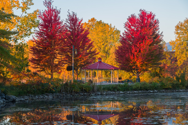 Red trees across the turtle pond.
