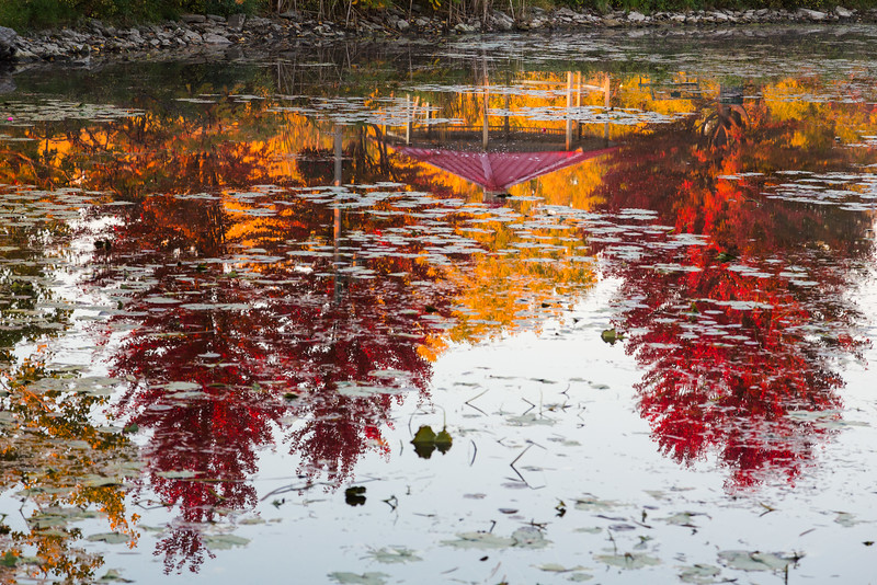 Trees reflected in turtle pond.