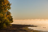 Looking down the Bay of Quinte shoreline. Waterfowl and fog.