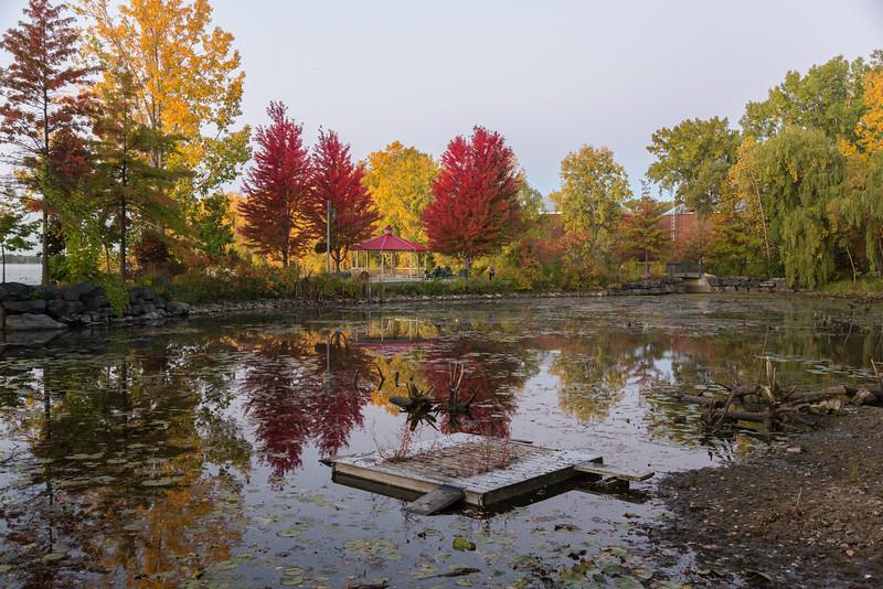 Trees around the tutrle pond before sunrise.