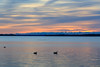Waterfowl on the Bay of Quinte before sunrise.