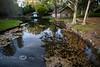 Asian Ponds in the Bellingrath Gardens