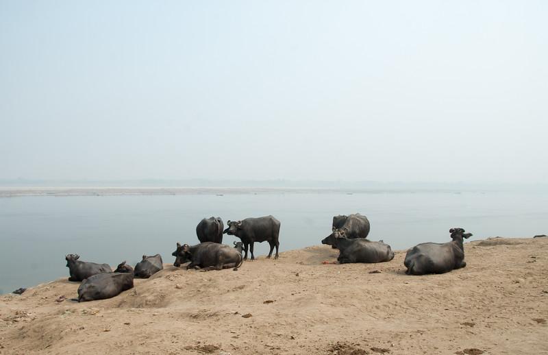 suki-zoe-india-2013 (2 of 1067)
