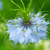 Brenda's flower