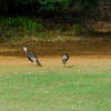 These girls were hanging out in the yard today (Oct 22, 2007)