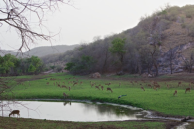 Images from the Ranthambhore National Park and Tiger Reserve, India