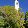 <b>Sather Tower, </b>U. C. Berkeley