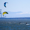Kite boarders, San Francisco Bay