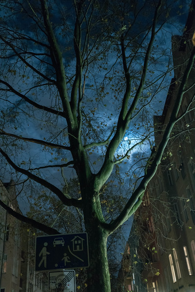 Full Moon and Leaning Tree, Berlin