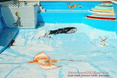 Empty pool / piscine vide