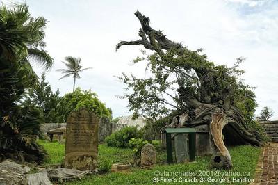 St. Peter's Church cemetery, St. George, Bermuda; part of the cemetery behind the church / partie arrière du petit cimetière qui entoure l'église St. Peter.