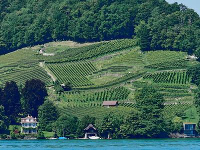 Hillside vineyard - using all the space