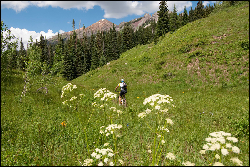 Dyke trail coming down from Kebler Pass in Crested Butte