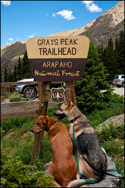 Accomplished pups.  4 fourteeners for Sam and 2 for Max
