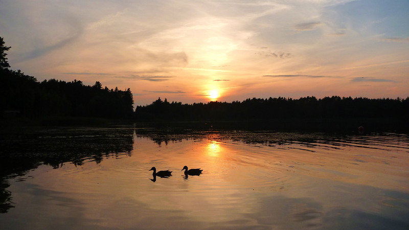 Lake Verevi sunset  with pair of ducks. Elva, Estonia August 2013