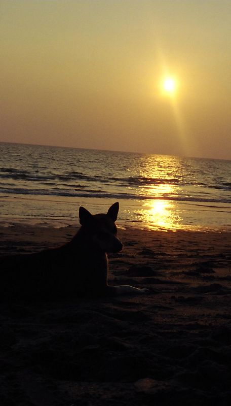 Sunset on the beach (with my friend the dog), Koh Lanta.